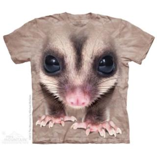 Big Face Sugar Glider